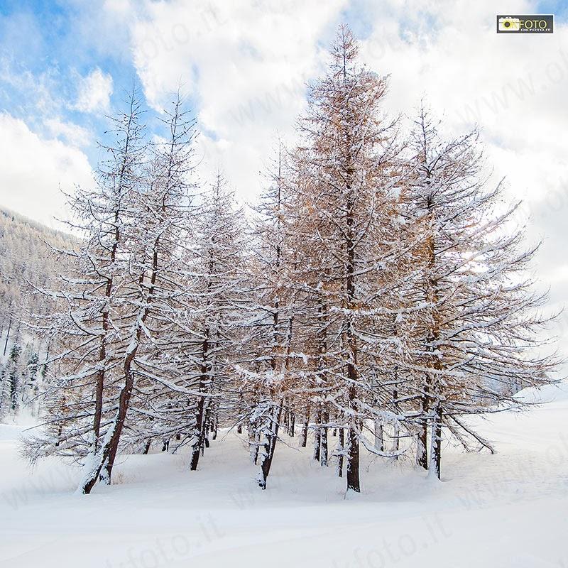 La neve crea paesaggi da fiaba