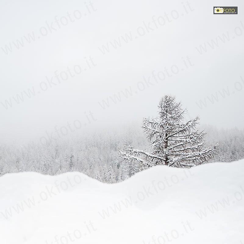 Un albero solitario in mezzo ad una abbondante nevicata