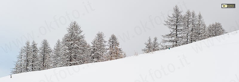 Gli alberi carichi di neve in val Chisone