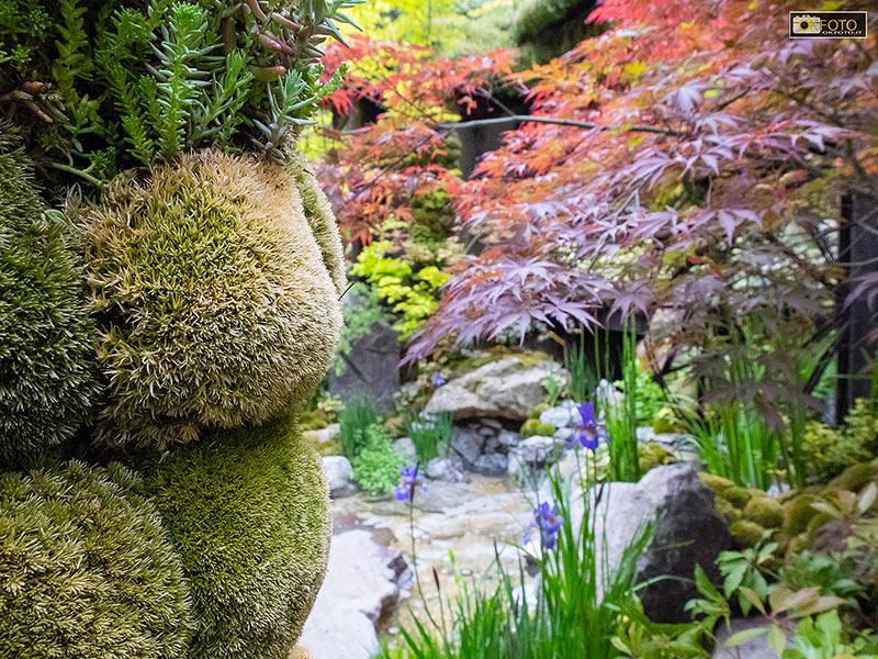 Un'immagine di un giardino allestito nel Chelsea Flower Show di Londra
