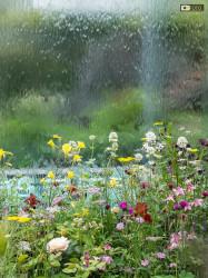 Si utilizza anche l'acqua per abbellire le realizzazioni floreali