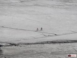 Lago Moncenisio svuotato-6