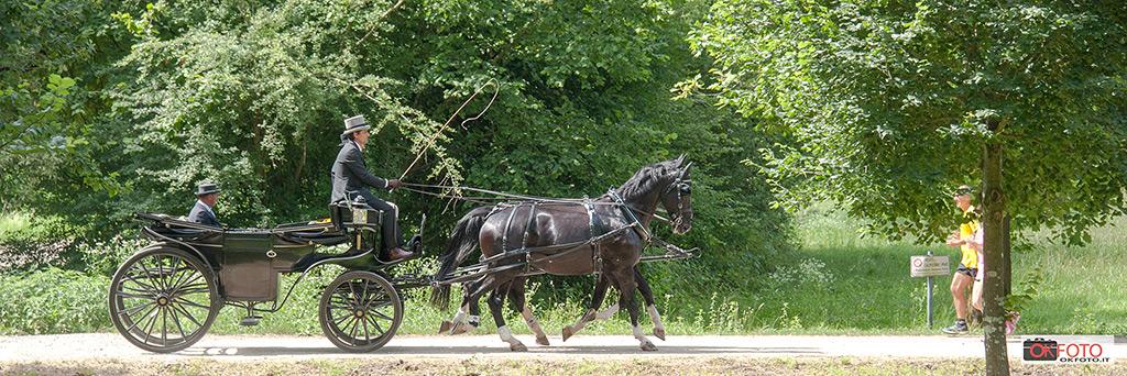 Cavalli di razza e carrozze d'epoca nel concorso della Venaria reale