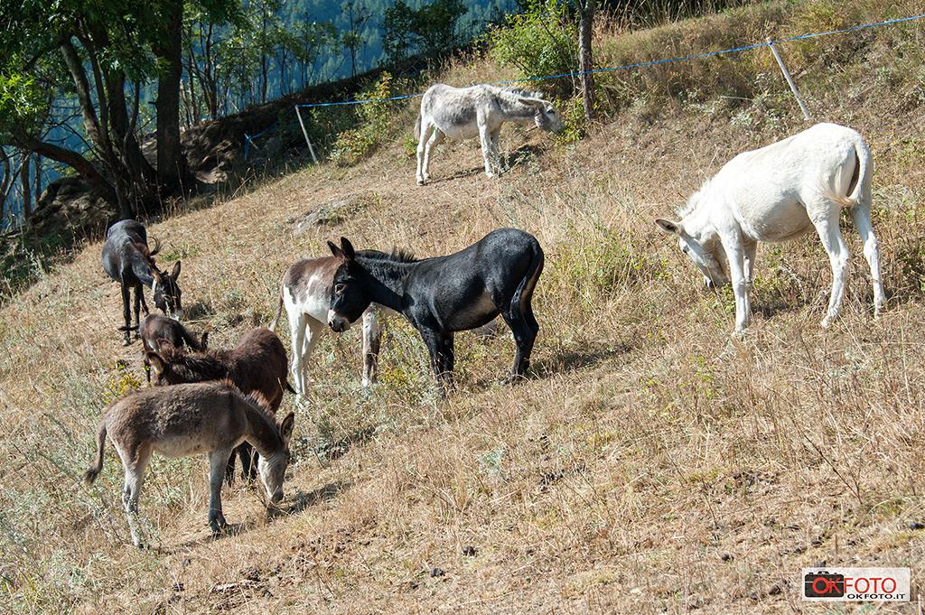 Animali alla Fiera zootecnica di Balboutet
