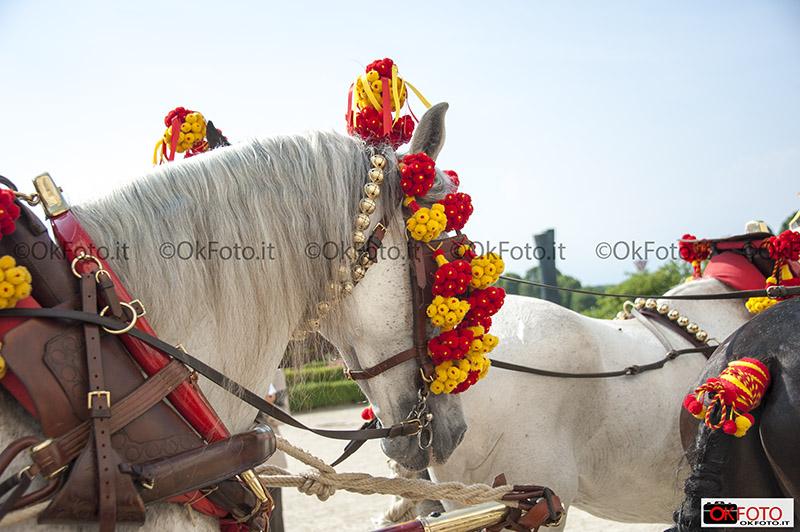 I colori della Spagna al concorso attacchi di tradizione alla Venaria Reale